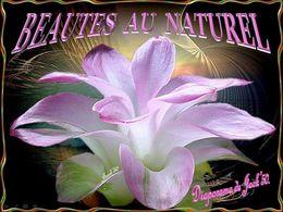 diaporama pps Beautés au naturel