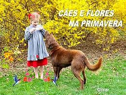 diaporama pps Cães e flores na primavera