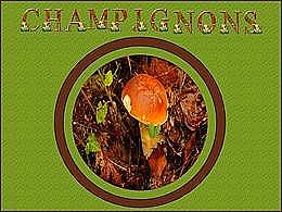 diaporama pps Champignons