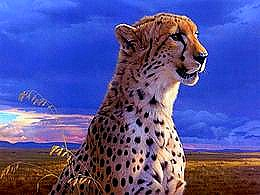 diaporama pps Cheetah