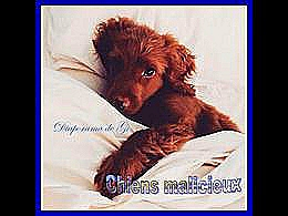 diaporama pps Chiens malicieux