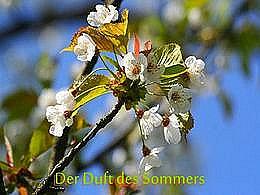 diaporama pps Der Duft des Sommers