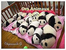 diaporama pps Des animaux bébés