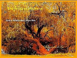 diaporama pps Des forêts en automne