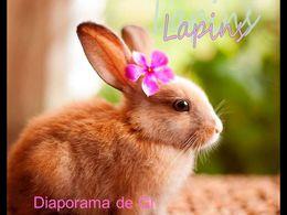 diaporama pps Des lapins