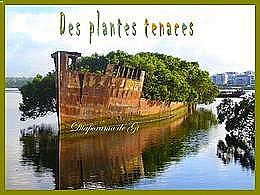 diaporama pps Des plantes tenaces