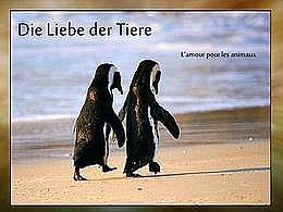 diaporama pps Die Liebe der Tiere