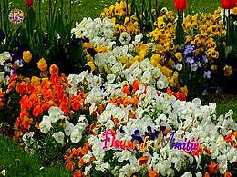 diaporama pps Fleurs de l'amitié
