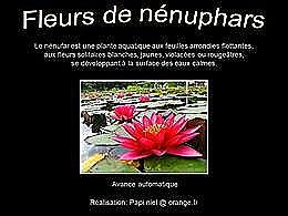 diaporama pps Fleurs de nénuphars