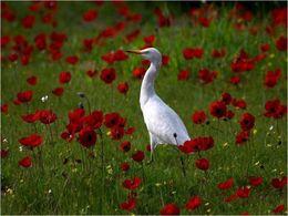 diaporama pps Fleurs des champs