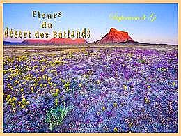 diaporama pps Fleurs du désert