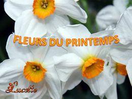 diaporama pps Fleurs du printemps
