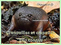 diaporama pps Grenouilles et crapauds peu connus