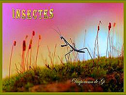 diaporama pps Insectes