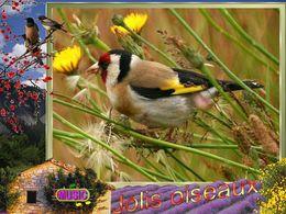 diaporama pps Jolis oiseaux