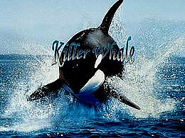 diaporama pps Killer Whale