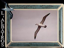 diaporama pps L'albatros