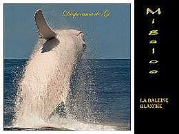 diaporama pps La baleine blanche
