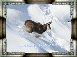 diaporama pps La neige et les animaux
