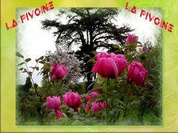 diaporama pps La Pivoine