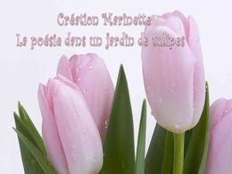 diaporama pps Poésie dans un jardin de tulipes