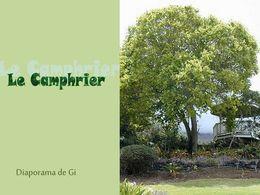 diaporama pps Le Camphrier