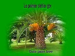 diaporama pps Le palmier dattier