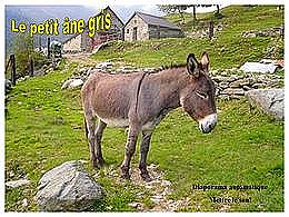 diaporama pps Le petit âne gris