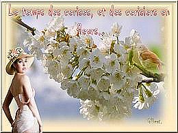 diaporama pps Le temps des cerises et des cerisiers en fleurs