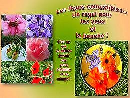 diaporama pps Les fleurs comestibles
