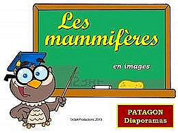 diaporama pps Les mammifères