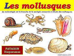 diaporama pps Les mollusques