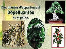 diaporama pps Les plantes d'appartement dépolluantes