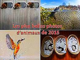 diaporama pps Les plus belles photos d'animaux 2015