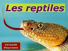 diaporama pps Les reptiles