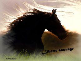 diaporama pps Liberté sauvage