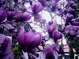 diaporama pps Magnolia
