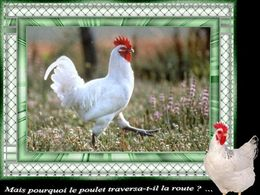 diaporama pps Pourquoi le poulet traversa t'il la route