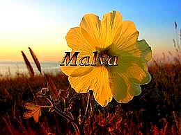 diaporama pps Malva