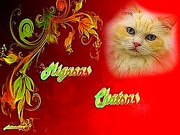 diaporama pps Mignons chatons
