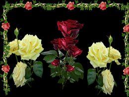 diaporama pps Não tenho palavra – Tenho Rosas