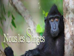 diaporama pps Nous les singes