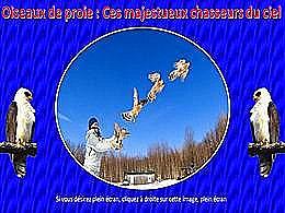 diaporama pps Oiseaux de proie – Majestueux chasseurs du ciel