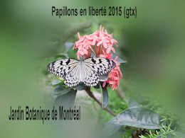 diaporama pps Papillons en liberté