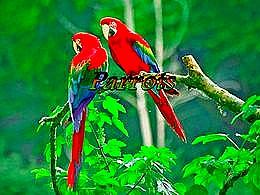 diaporama pps Parrots