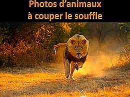 diaporama pps Photos d'animaux à couper le souffle