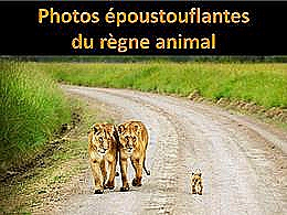 diaporama pps Photos époustouflantes du règne animal