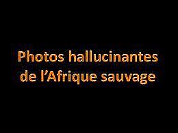 diaporama pps Photos hallucinantes de l'Afrique sauvage