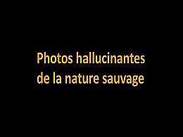 diaporama pps Photos hallucinantes de la nature sauvage