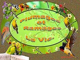 diaporama pps Plumages et ramages